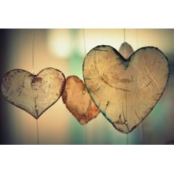 formation système cardiovasculaire et ses pathologies, naturopathie, en visio conférence- distanciel, en ligne