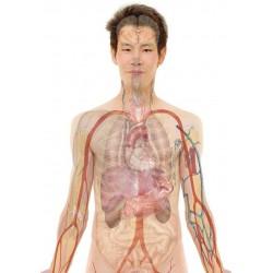 formation pathologies du foie : les hépatites en visio conférence - à distance - en ligne par le centre lingdao