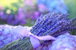 tout savoir sur l'olfactothérapie